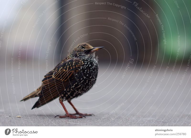 i wanna be a star Tier ruhig Vogel stehen Gelassenheit geduldig Star