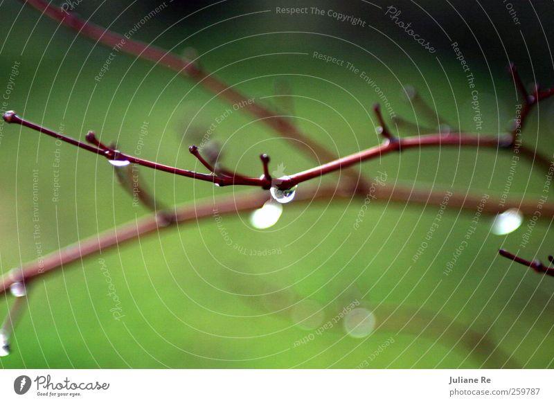 Tau | Tropfen Umwelt Natur Pflanze Urelemente Wasser Wassertropfen Winter Klima Wetter Schönes Wetter Regen Eis Frost Schnee Baum Ast Garten Park Holz Glas