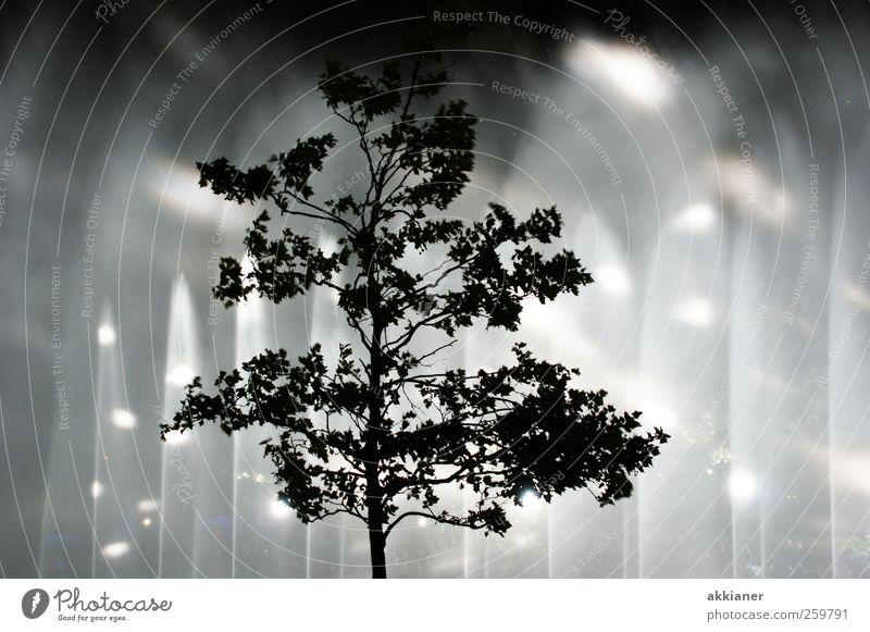 Sie kommen Natur Wasser Baum Pflanze kalt Kunst nass Show Veranstaltung Laubbaum