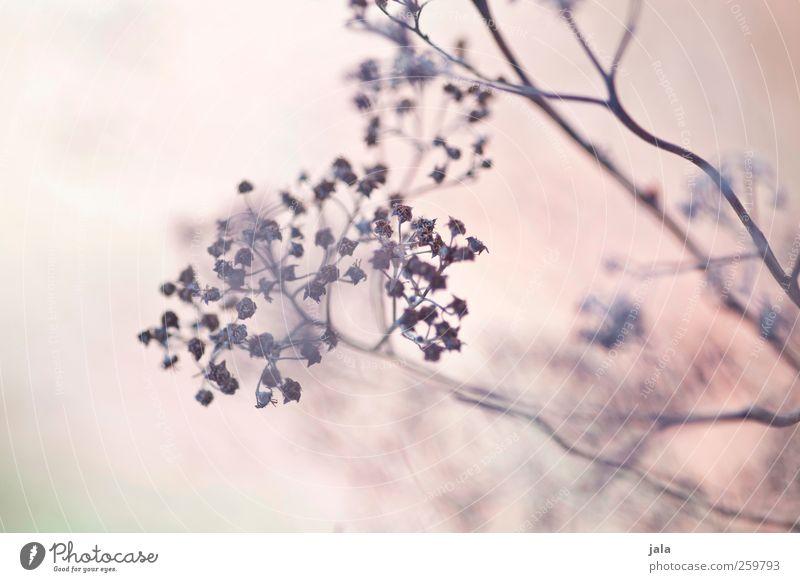 dried flowers Natur Pflanze Blume Umwelt Blüte hell braun natürlich ästhetisch Wildpflanze