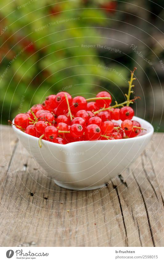 Eine Schüssel Johannisbeeren Lebensmittel Frucht Ernährung Bioprodukte Vegetarische Ernährung Gesunde Ernährung Sommer wählen frisch Gesundheit rot genießen