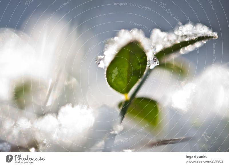durch den Winter Natur Pflanze Wasser Blatt kalt Umwelt Leben Wiese Schnee Garten Feld Eis Wachstum frisch Kraft