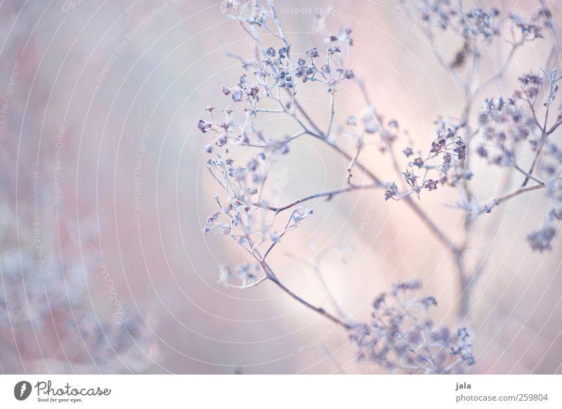 dried flowers Umwelt Natur Pflanze Frühling Blume Wildpflanze ästhetisch hell natürlich Farbfoto Außenaufnahme Menschenleer Tag Schwache Tiefenschärfe