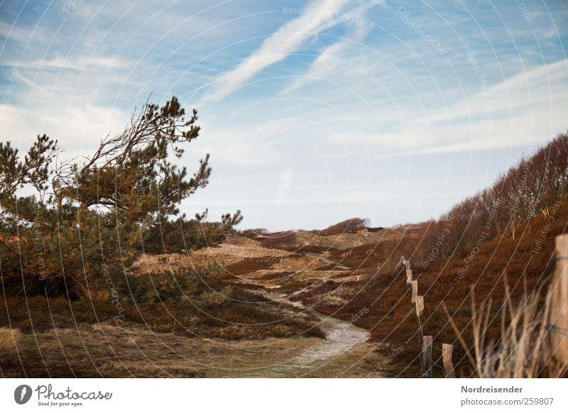 Spiekeroog | Warm harmonisch Sinnesorgane ruhig Sommer wandern Natur Landschaft Pflanze Wolken Schönes Wetter Baum Gras Sträucher Küste Nordsee Wege & Pfade