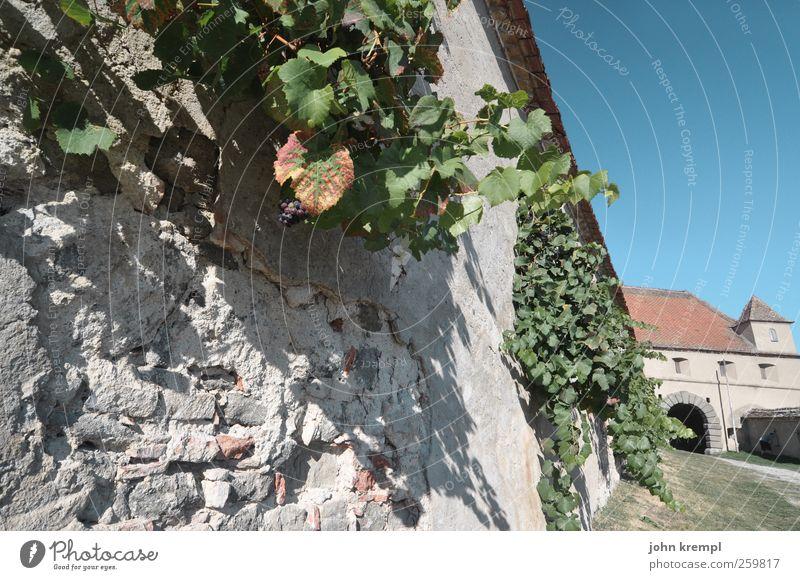 Anlehnungsbedürftig blau grün Wand Mauer grau Vergänglichkeit Wandel & Veränderung Macht historisch Burg oder Schloss Dorf verfallen Wahrzeichen Denkmal Mut Sehenswürdigkeit