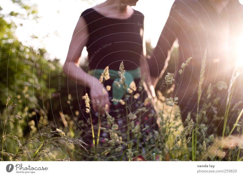 Sommer Mensch Frau Mann Jugendliche schön Sonne Erwachsene Erholung Liebe Wiese feminin Leben Gras Glück Paar
