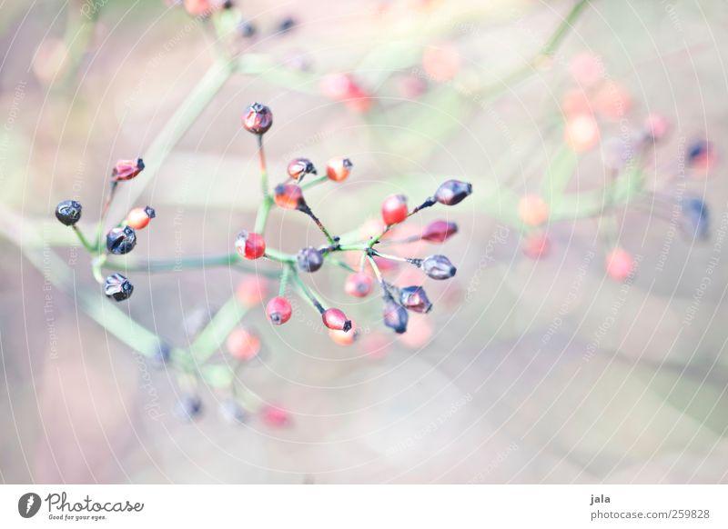 seed heads Umwelt Natur Pflanze Frühling Sträucher Wildpflanze ästhetisch hell natürlich Farbfoto Außenaufnahme Menschenleer Tag Schwache Tiefenschärfe
