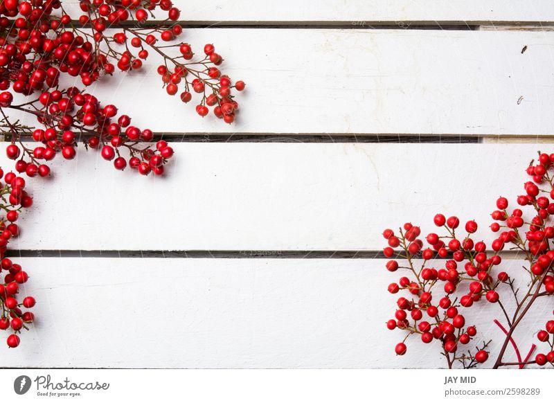 nandian Weihnachtszweig mit roten Beeren weißer Holzhintergrund Freude Winter Dekoration & Verzierung Feste & Feiern Weihnachten & Advent Natur Blumenstrauß