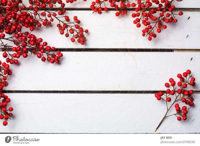 nandian Weihnachtszweig mit roten Beeren, weißer Holzhintergrund Freude Winter Dekoration & Verzierung Feste & Feiern Weihnachten & Advent Natur hell Farbe