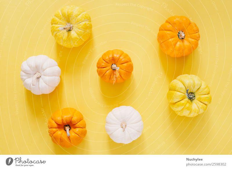 Flacher Lay-Stil von frischen Bio-Kürbissen Gemüse Design Leben Dekoration & Verzierung Tapete Feste & Feiern Erntedankfest Halloween Natur Herbst trendy modern
