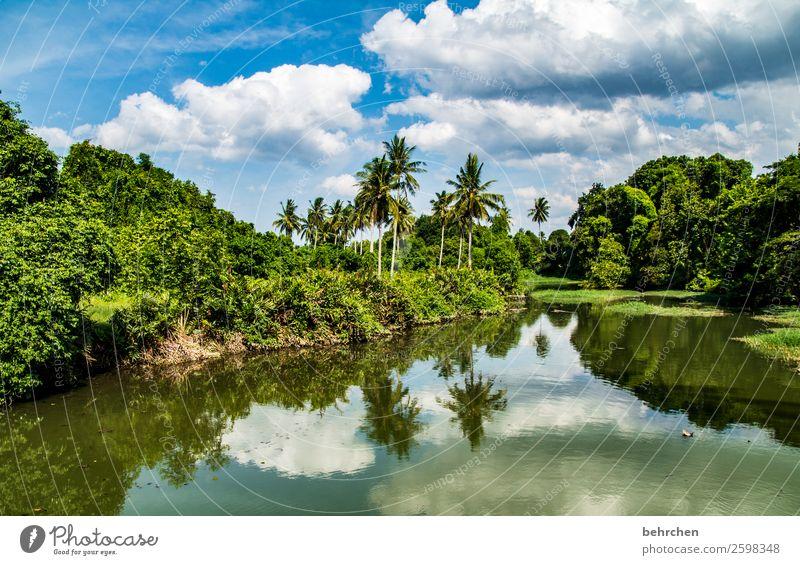 heiter bis wolkig Ferien & Urlaub & Reisen Tourismus Ausflug Abenteuer Ferne Freiheit Natur Landschaft Himmel Wolken Pflanze Baum Sträucher Blatt Palme Urwald
