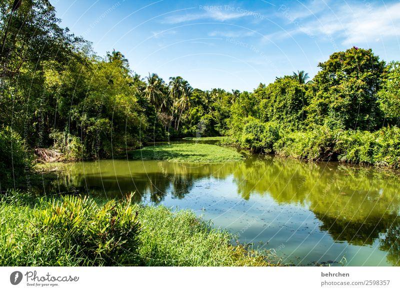 klimaschutz Himmel Ferien & Urlaub & Reisen Natur Pflanze grün Landschaft Baum Wolken Blatt Ferne Umwelt Tourismus außergewöhnlich Freiheit Ausflug Idylle