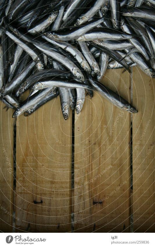 Mikado - spiel mit Essen! Fisch Ernährung Sushi Abenteuer Beginn Stress chaotisch Ende Gesellschaft (Soziologie) Klima nachhaltig Netzwerk Ordnung rein Rettung