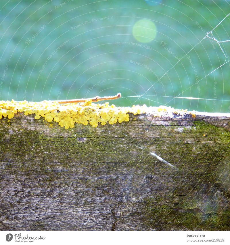 Nowhere Land Umwelt Natur Sonnenlicht Schönes Wetter Moos Flechten Wiese Mauer Wand Spinnennetz Holzzaun ästhetisch hell natürlich blau gelb grau grün Stimmung