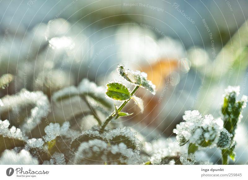 Kältehauch Natur schön Pflanze Winter Blatt Umwelt kalt Gefühle Garten Stimmung Park Eis Feld Nebel glänzend Klima