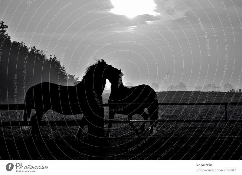 Liebe Natur Ferien & Urlaub & Reisen Tier schwarz Erholung Umwelt dunkel Freiheit grau Glück Freundschaft Stimmung Zufriedenheit ästhetisch Fröhlichkeit Pferd