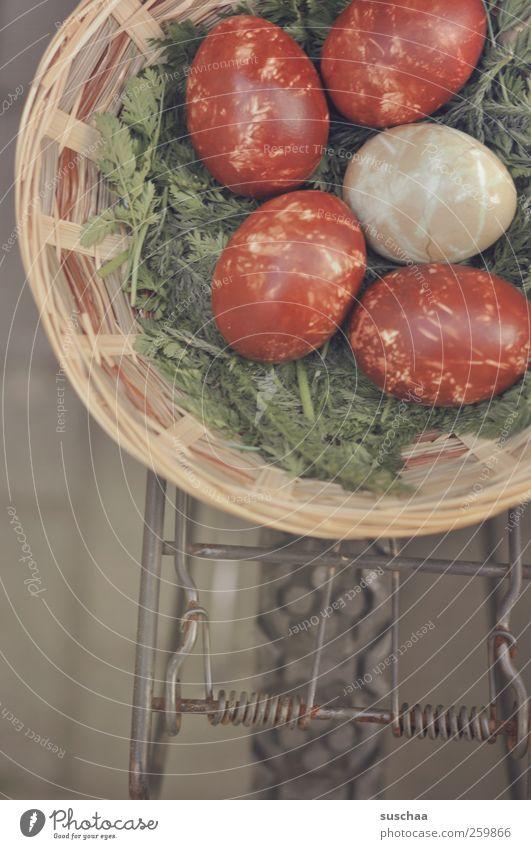suschaas lieferservice II Ostern Frühling einzigartig klug braun Kultur Ritual Osterei Osterkörbchen Lieferung Beförderung Gepäckträger Reifen