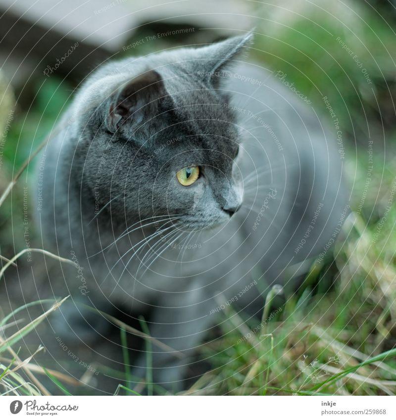 Ein Garten so groß wie die Welt :-) Wiese Haustier Katze 1 Tier Tierjunges beobachten entdecken hocken Blick Neugier niedlich Gefühle Stimmung Wachsamkeit