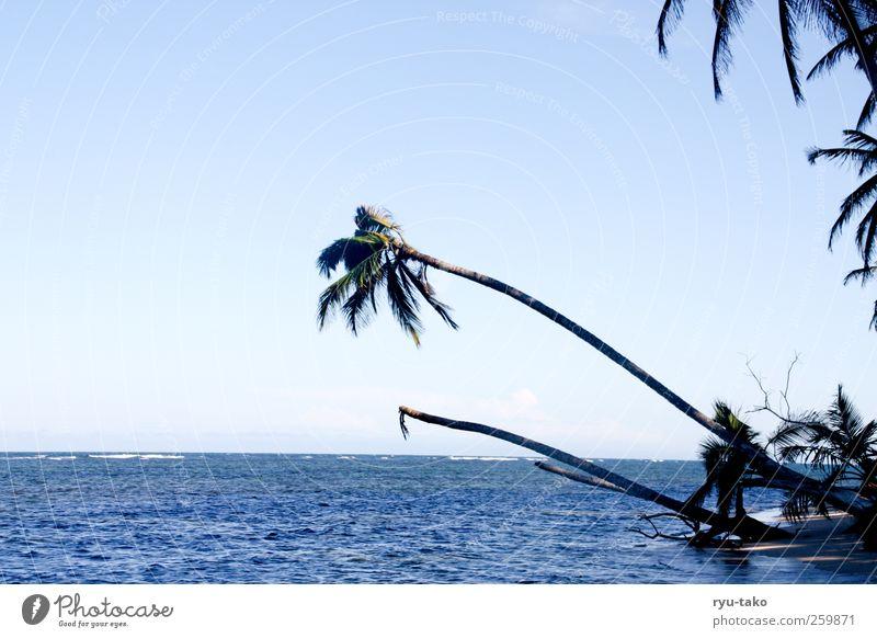 das paradies ruft Himmel Natur blau Wasser Pflanze Meer ruhig Freiheit Sand Küste Zufriedenheit ästhetisch Insel Sträucher rein nah