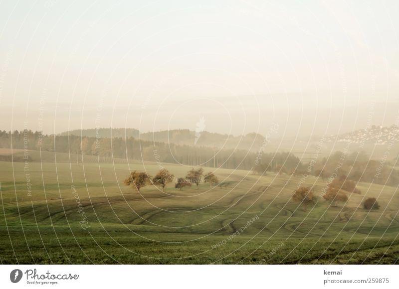 Spuren Himmel Natur grün Baum Pflanze ruhig Wald Herbst Wiese Umwelt Landschaft Wege & Pfade Feld Nebel authentisch Hügel