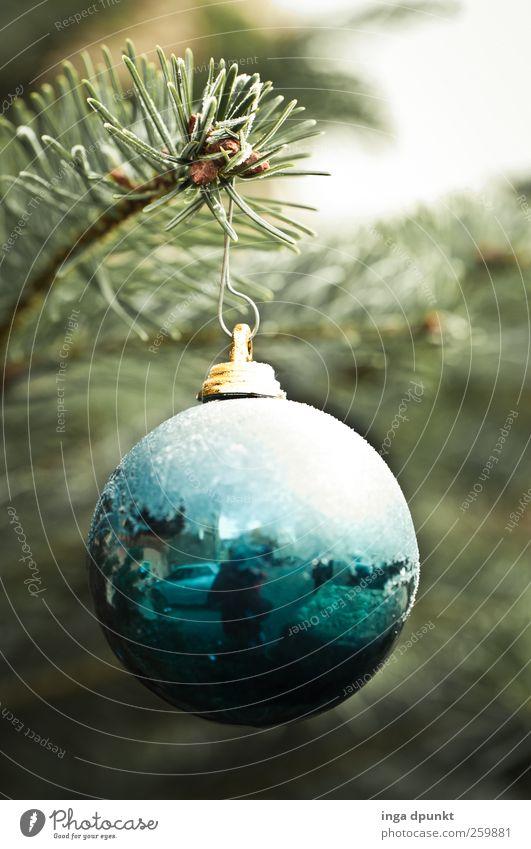 nach dem Fest Umwelt Natur Urelemente Winter Eis Frost Baum Tanne Weihnachtsbaum Weihnachtsdekoration Weihnachtsmarkt Garten Christbaumkugel Kugel hängen