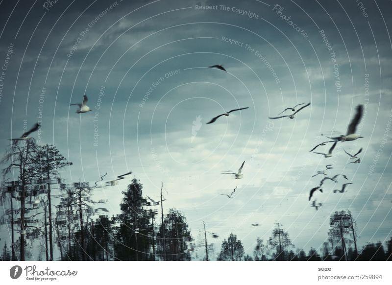 Wasservögel Himmel Natur Wasser Baum Wolken Tier Umwelt dunkel Landschaft See Vogel fliegen Klima Urelemente fantastisch Möwe