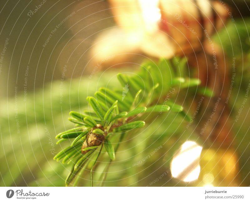 krist baum tak kerstboom Ladengeschäft denneboom