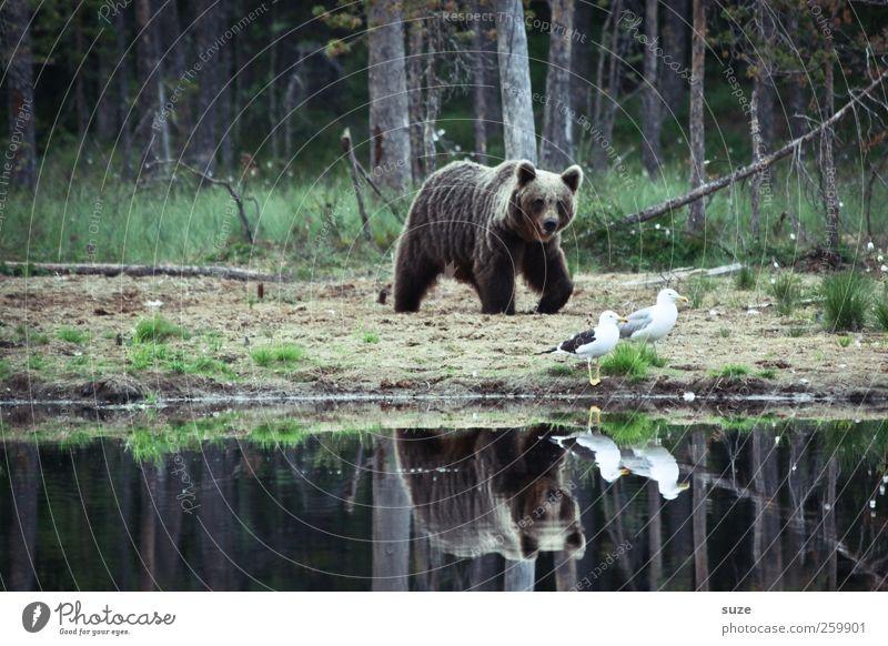 Hm, legga Möwe Jagd Umwelt Natur Landschaft Tier Wald Seeufer Teich Fell Wildtier Vogel 3 beobachten bedrohlich Neugier stark wild braun Kraft Appetit & Hunger