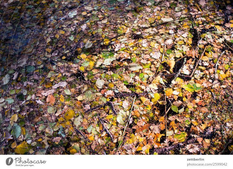 Herbstlaub im Jungfernheideteich Natur Pflanze ruhig Textfreiraum Tiefenschärfe Blatt mehrfarbig Wasser See Teich Im Wasser treiben Hintergrundbild Farbe