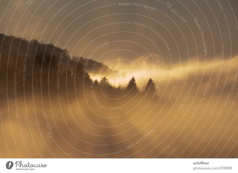 Watterausch III Natur rot Winter Wolken schwarz Ferne Wald gelb Landschaft Berge u. Gebirge Nebel Klima außergewöhnlich Hügel Schönes Wetter Schwarzwald