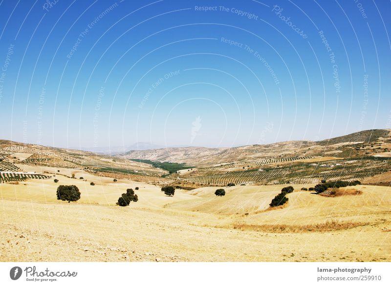 Sierra [X] Natur Baum Ferien & Urlaub & Reisen Ferne Landschaft Wärme Feld Spanien Dürre Ödland Andalusien Sevilla Malaga Pampa Sierra Nevada