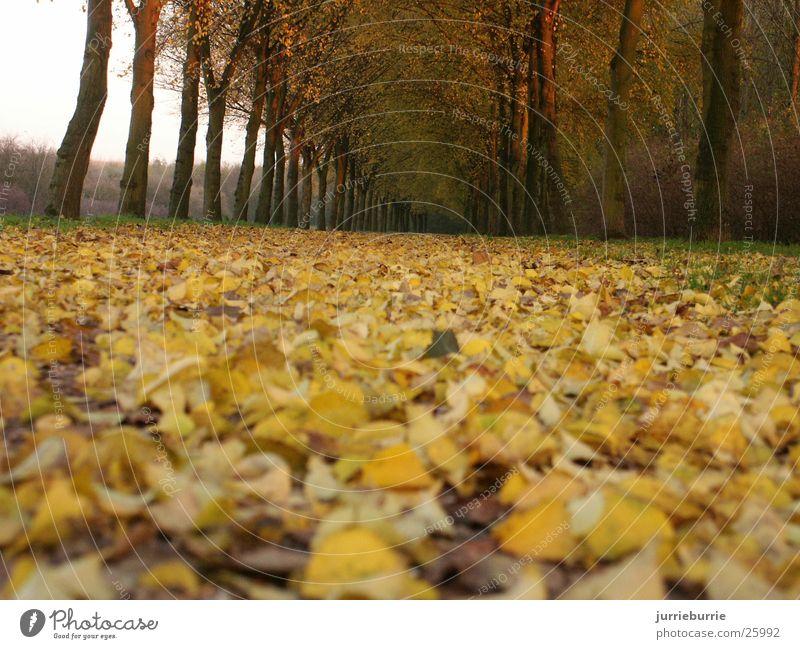 Bos mit bladeren Herbst greifen Bündel Baum Prospekt bladerdek