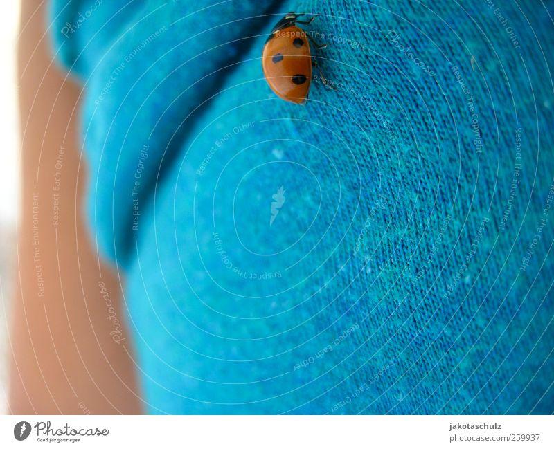 Ladybug Mensch feminin Junge Frau Jugendliche Leben Bauch 1 18-30 Jahre Erwachsene Umwelt Natur Landschaft Pflanze Sommer Schönes Wetter T-Shirt Tier Käfer