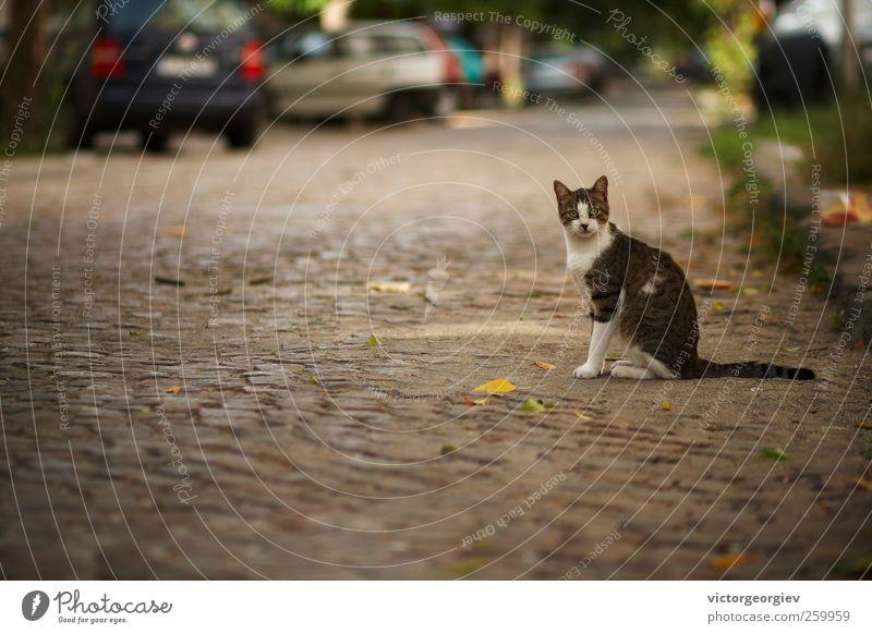 Katze Stadt Tier Straße PKW sitzen niedlich Freundlichkeit Tiergesicht Haustier Überraschung Straßenbelag Altstadt Hauskatze Flucht seltsam