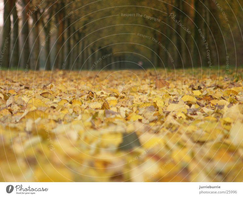 bos Baum Herbst greifen Bündel Prospekt