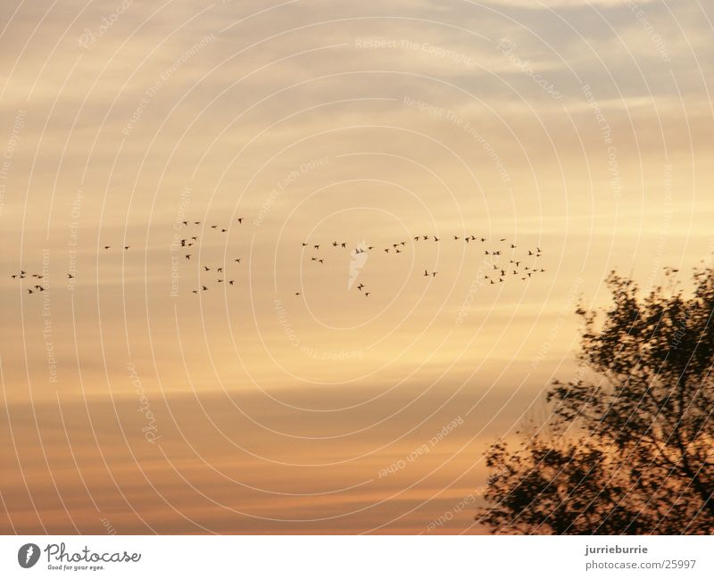 birds flying to the south Vogel Herbst luht Vogelappetit