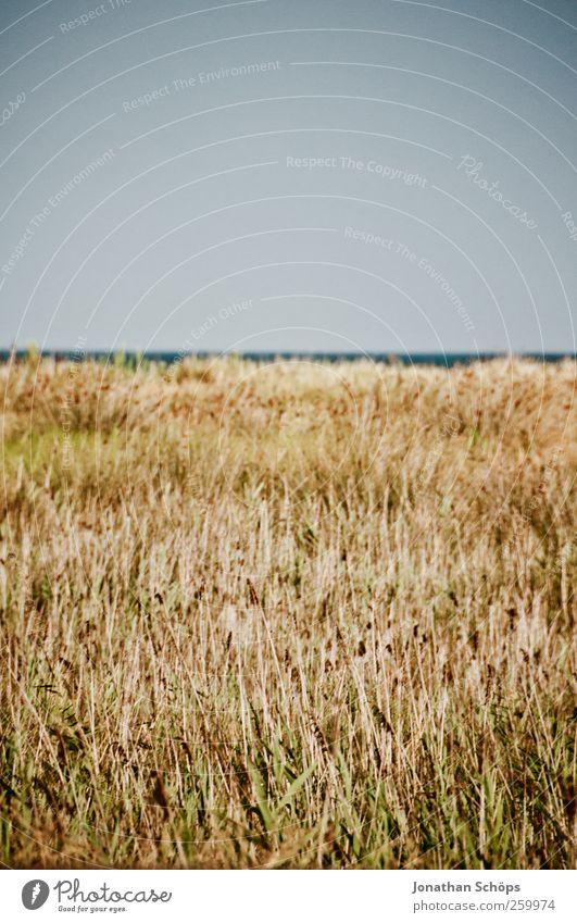 vorne scharf, hinten nicht Himmel Natur Ferien & Urlaub & Reisen Meer ruhig Ferne gelb Umwelt Landschaft Freiheit grau Wärme Horizont braun Abenteuer leer