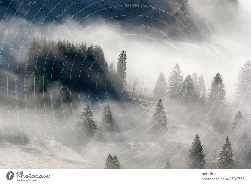 Nebelwald Ferien & Urlaub & Reisen Ausflug Ferne Sommer Berge u. Gebirge wandern Natur Landschaft Pflanze Baum Blatt Wiese Feld Wald Hügel kalt natürlich braun