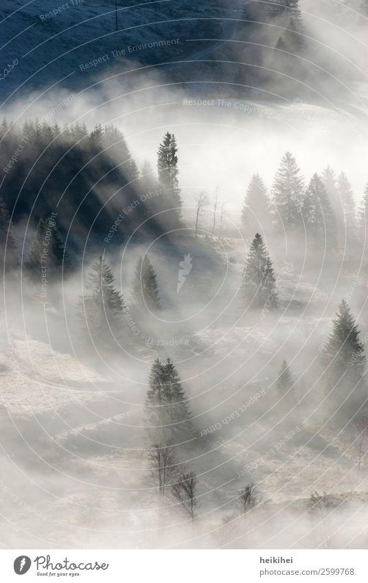 Nebelstimmung im Schwarzwald Ferien & Urlaub & Reisen Tourismus Ausflug Ferne Berge u. Gebirge wandern Umwelt Natur Landschaft Herbst Baum Wald Sport dunkel