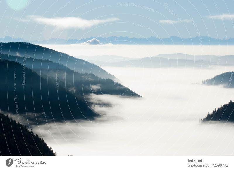 Nebelmeer im Schwarzwald nebel Feldberg süddeutsche Berge u. Gebirge Landschaft Wald Außenaufnahme Natur Menschenleer Himmel Hügel Baum Farbfoto Herbst Wolken