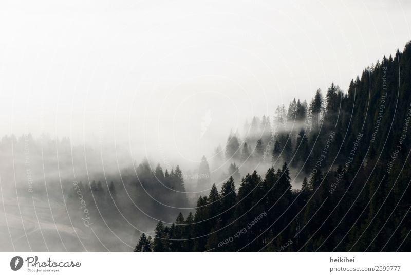 SCHWARZwald Ferien & Urlaub & Reisen Tourismus Ausflug Abenteuer Ferne Freiheit Berge u. Gebirge wandern Natur Landschaft Pflanze Himmel Herbst Nebel Baum Feld