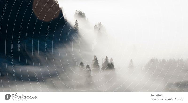 Nebelwald II Freizeit & Hobby Ferien & Urlaub & Reisen Tourismus Ausflug Abenteuer Ferne Freiheit Berge u. Gebirge wandern Umwelt Natur Landschaft Pflanze Tier