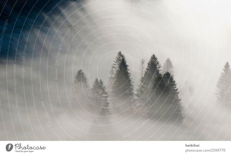 Nebelwald Freizeit & Hobby Ferien & Urlaub & Reisen Tourismus Ausflug Abenteuer Freiheit Berge u. Gebirge wandern Umwelt Natur Landschaft Pflanze Frühling