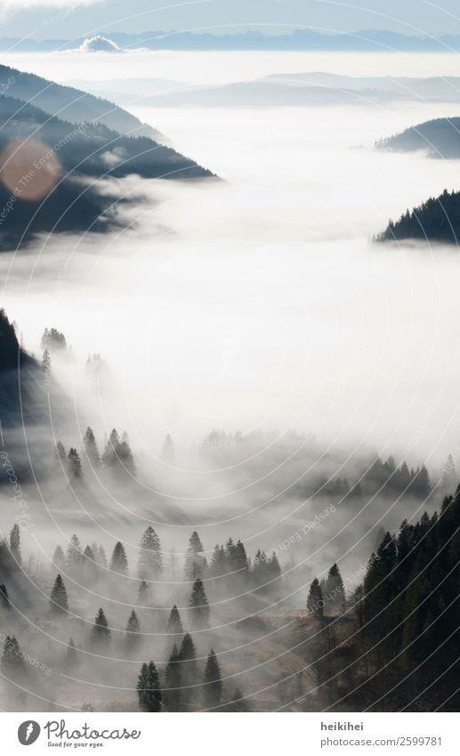 Nebel im Schwarzwald Freizeit & Hobby Ferien & Urlaub & Reisen Tourismus Ausflug Abenteuer Ferne Freiheit Berge u. Gebirge wandern Natur Landschaft Pflanze Baum