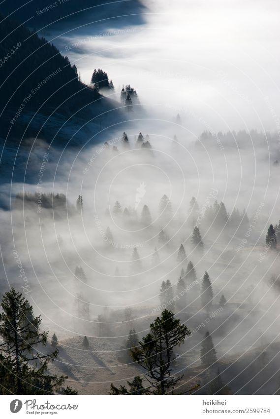 Nebellandschaft Ferien & Urlaub & Reisen Natur Pflanze schön Landschaft Baum Erholung ruhig Wald Ferne Berge u. Gebirge Umwelt Tourismus Freiheit Ausflug