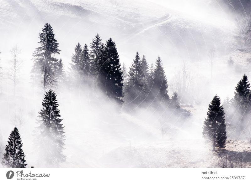 Nebelwald II Ferien & Urlaub & Reisen Natur Pflanze weiß Landschaft Baum Wolken Wald Ferne Berge u. Gebirge schwarz Herbst natürlich Tourismus Freiheit grau