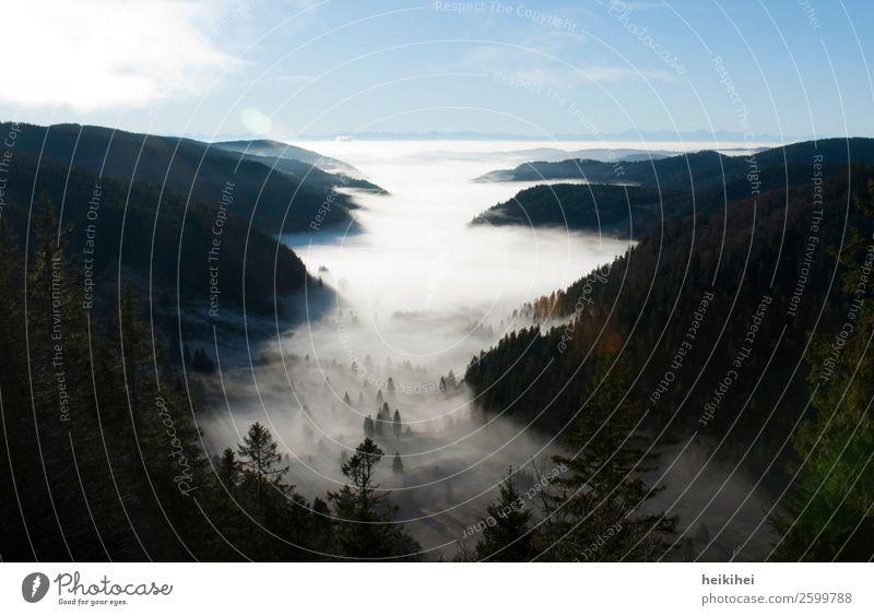 Spätsommernebel im Schwarzwald Natur Landschaft Himmel Wolken Sonnenaufgang Sonnenuntergang Sommer Herbst Nebel Baum Wald Hügel Alpen Berge u. Gebirge Gipfel