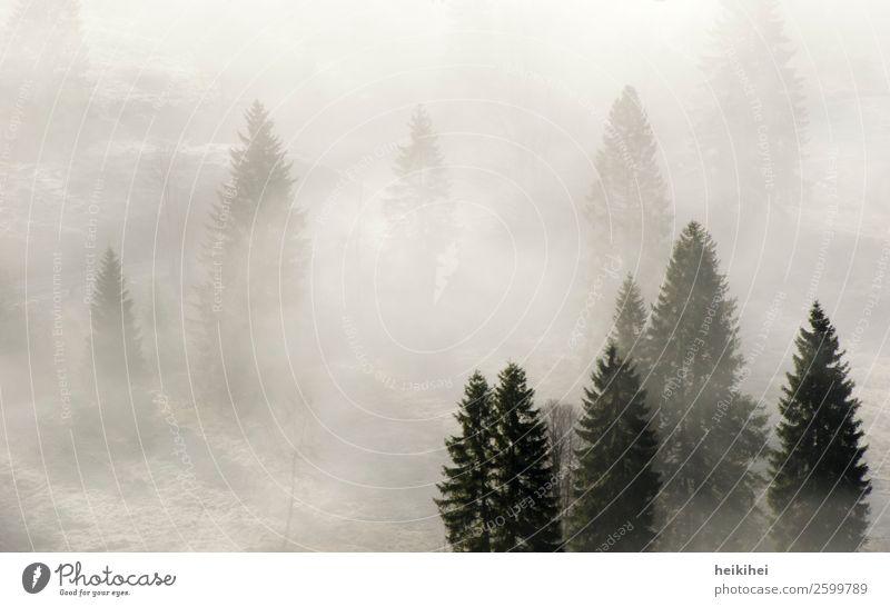Nebelwald Ferien & Urlaub & Reisen Natur schön Landschaft weiß Baum Wald Ferne Berge u. Gebirge schwarz Herbst natürlich Tourismus Deutschland Freiheit grau