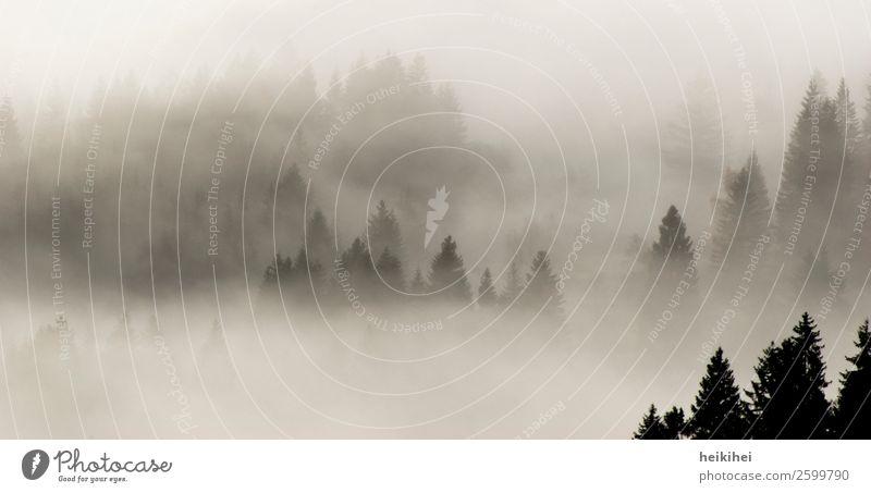 Wald im Nebel Ferien & Urlaub & Reisen Tourismus Ausflug Abenteuer Ferne Freiheit Sommer Berge u. Gebirge Natur Landschaft Herbst Baum natürlich schön grau