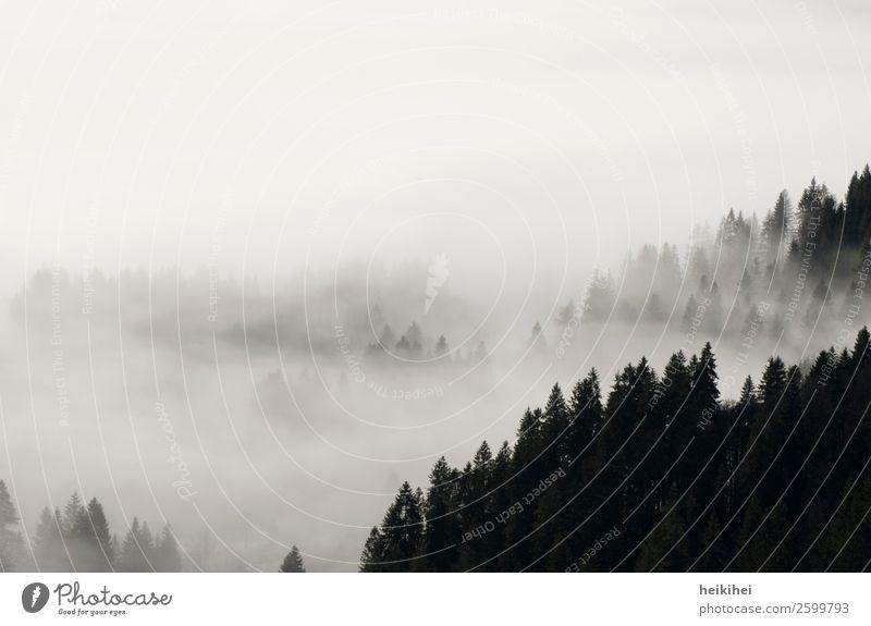 SCHWARZwald II Himmel Ferien & Urlaub & Reisen Natur Pflanze weiß Landschaft Baum Meer Erholung ruhig Winter Ferne Berge u. Gebirge dunkel schwarz Herbst